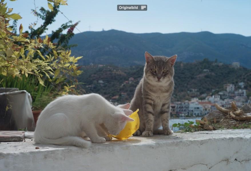 Das Schöne an der Katze ist das Fell.